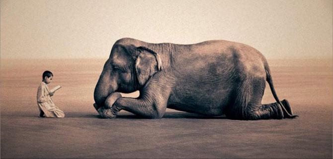Copii, animale si iubire, de Gregory Snow - Poza 1