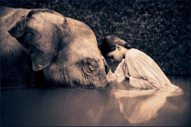 Copii, animale si iubire, de Gregory Snow - Poza 10