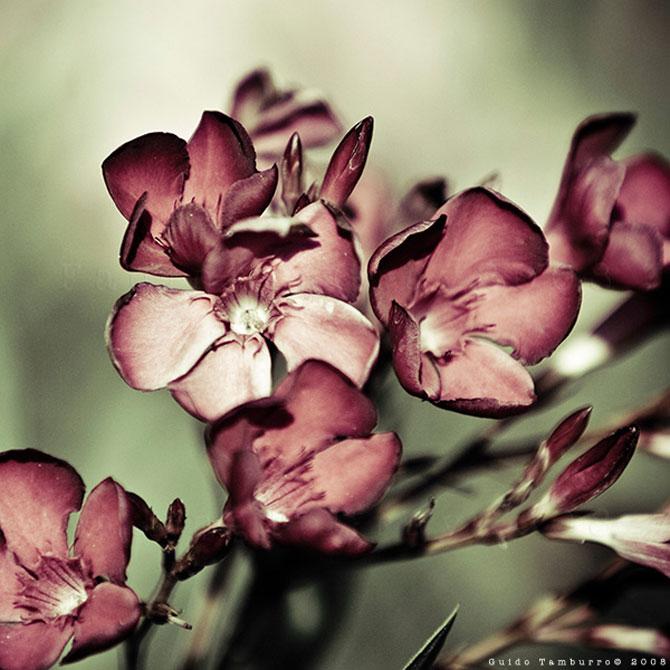 Toate florile lui Guido Tamburro - Poza 7