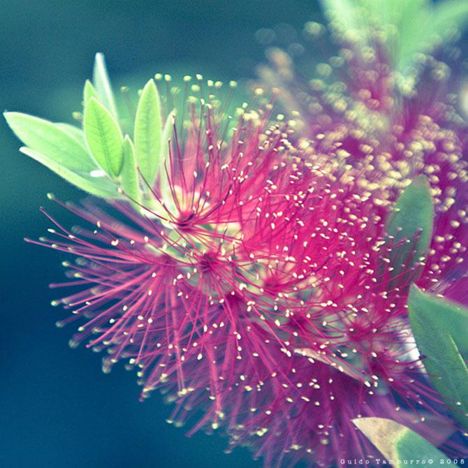 Toate florile lui Guido Tamburro - Poza 9