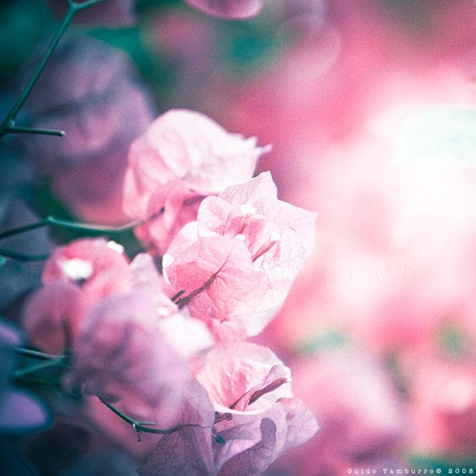 Toate florile lui Guido Tamburro - Poza 10