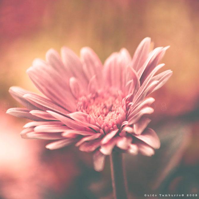 Toate florile lui Guido Tamburro - Poza 11