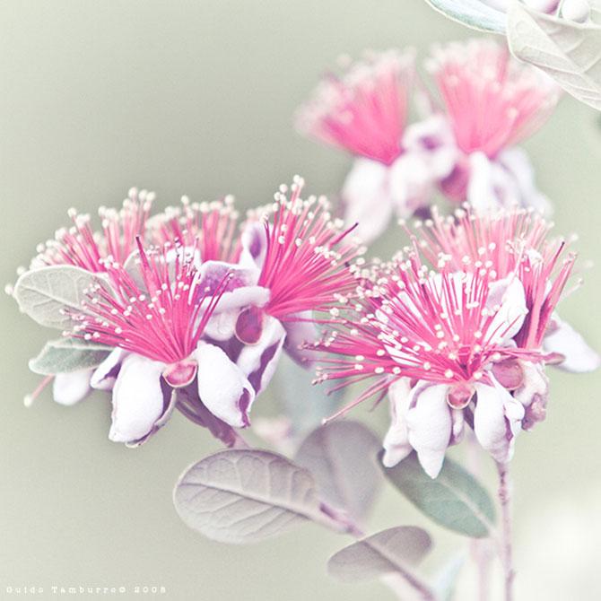 Toate florile lui Guido Tamburro - Poza 12