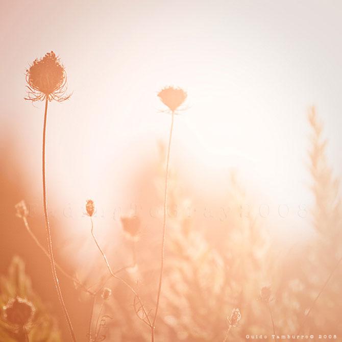 Toate florile lui Guido Tamburro - Poza 14