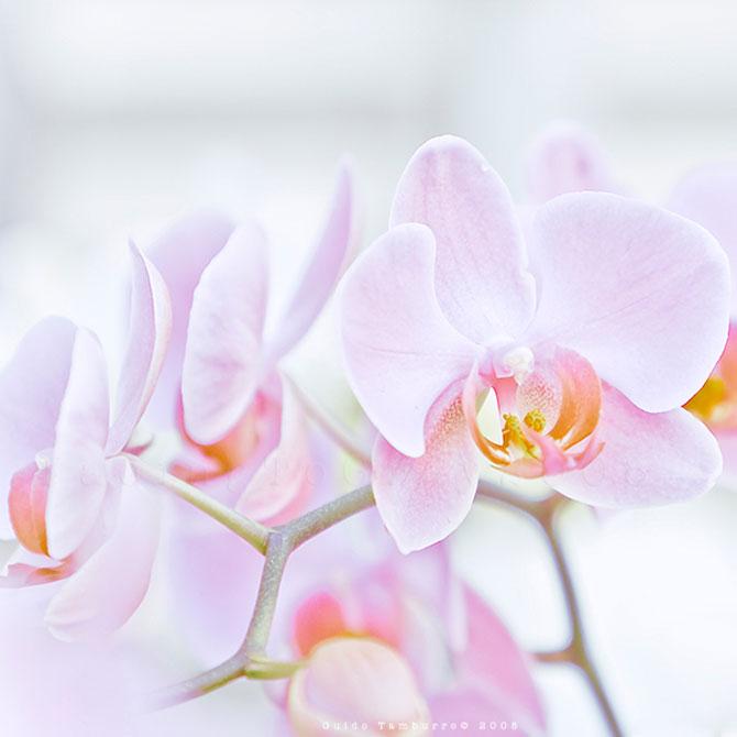 Toate florile lui Guido Tamburro - Poza 15