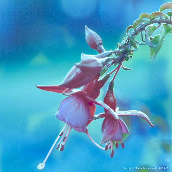 Toate florile lui Guido Tamburro - Poza 16