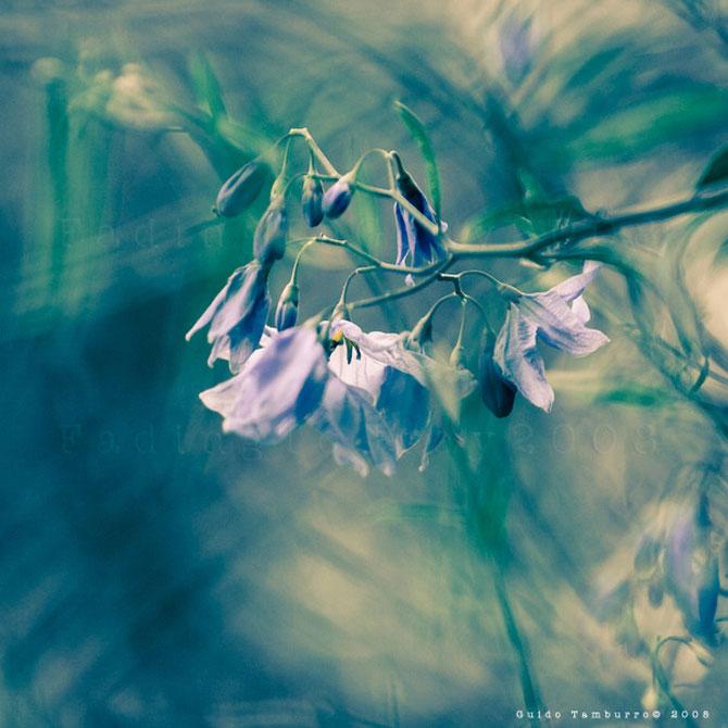 Toate florile lui Guido Tamburro - Poza 17