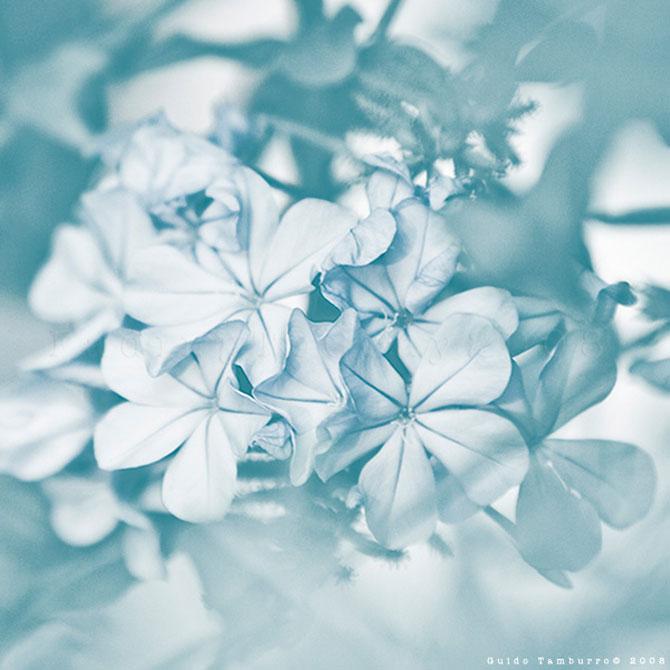 Toate florile lui Guido Tamburro - Poza 19