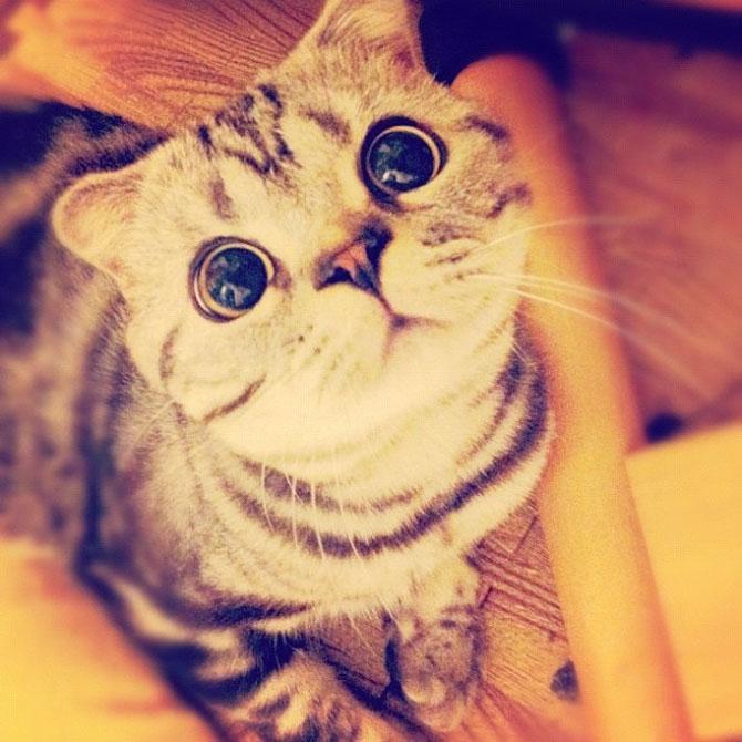 Pisica Shishi e sefa Internetului - Poza 3