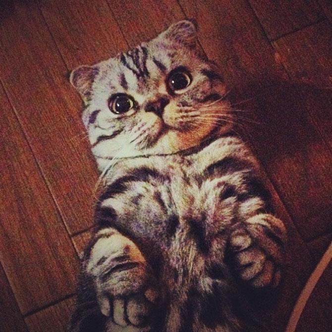 Pisica Shishi e sefa Internetului - Poza 4