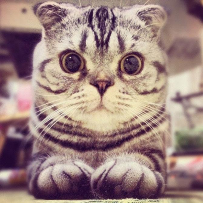 Pisica Shishi e sefa Internetului - Poza 5