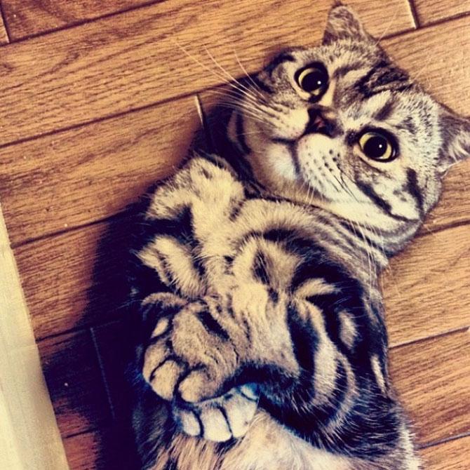 Pisica Shishi e sefa Internetului - Poza 6