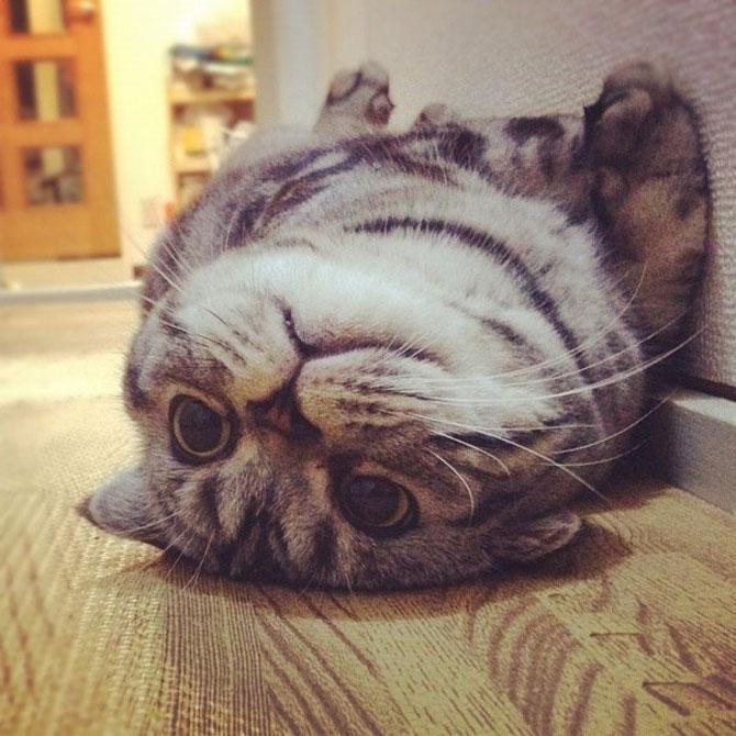 Pisica Shishi e sefa Internetului - Poza 7