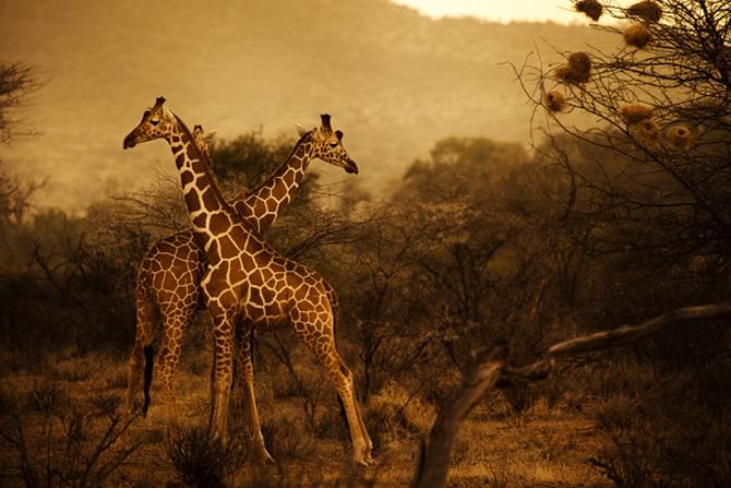 Safari in cautarea subtilului: Diego Arroyo - Poza 6