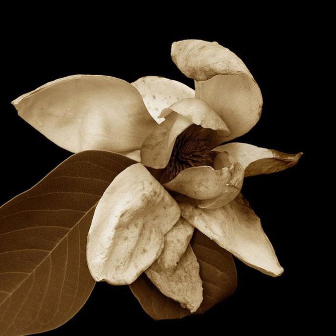 11 poze sepia, delicate ca o aripa de fluture - Poza 1