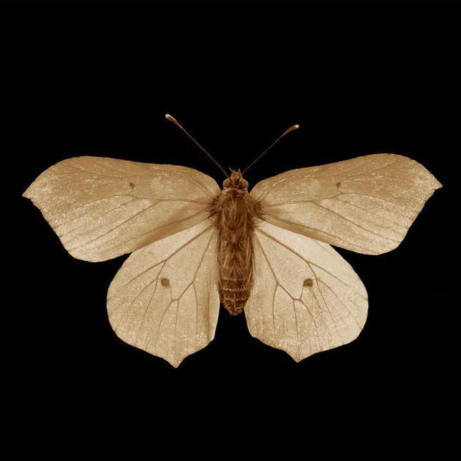 11 poze sepia, delicate ca o aripa de fluture
