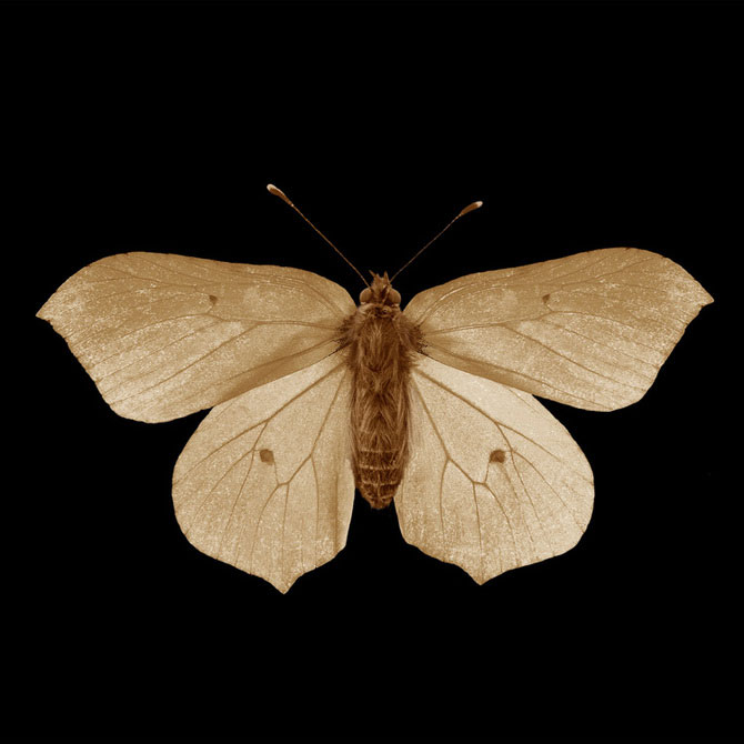 11 poze sepia, delicate ca o aripa de fluture - Poza 11