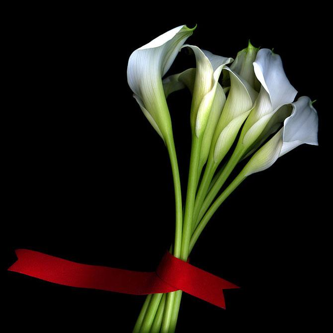 15 fotografii superbe cu flori, de Magda Indigo