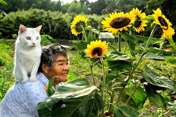 Bunica Misao si pisica Fukumaru, prietene de-o viata - Poza 8