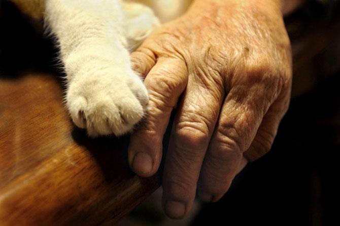 Bunica Misao si pisica Fukumaru, prietene de-o viata - Poza 9
