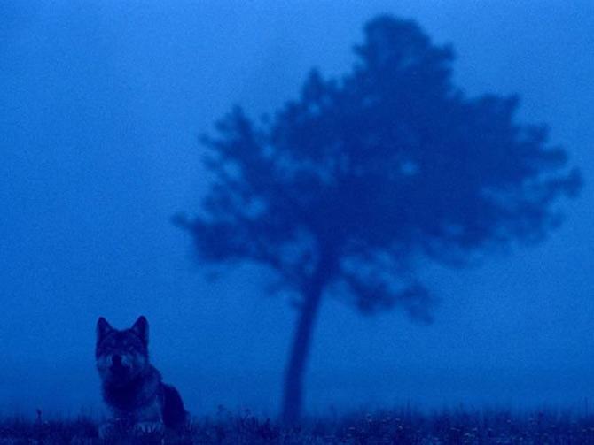 Viata in albastru: National Geographic - Poza 2