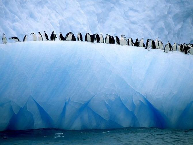 Viata in albastru: National Geographic - Poza 5