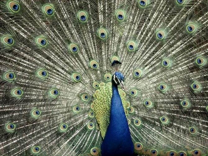 Viata in albastru: National Geographic - Poza 6