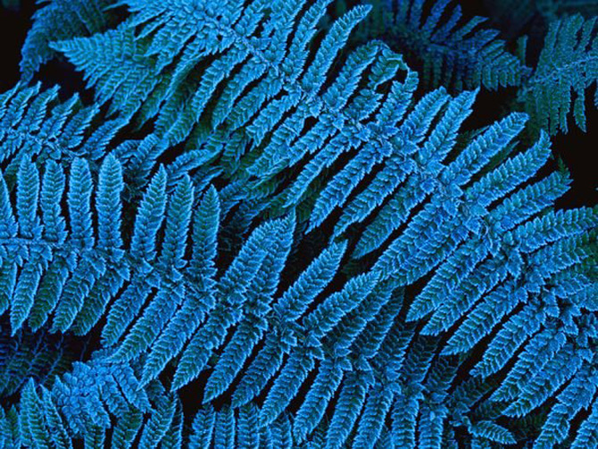 Viata in albastru: National Geographic - Poza 11