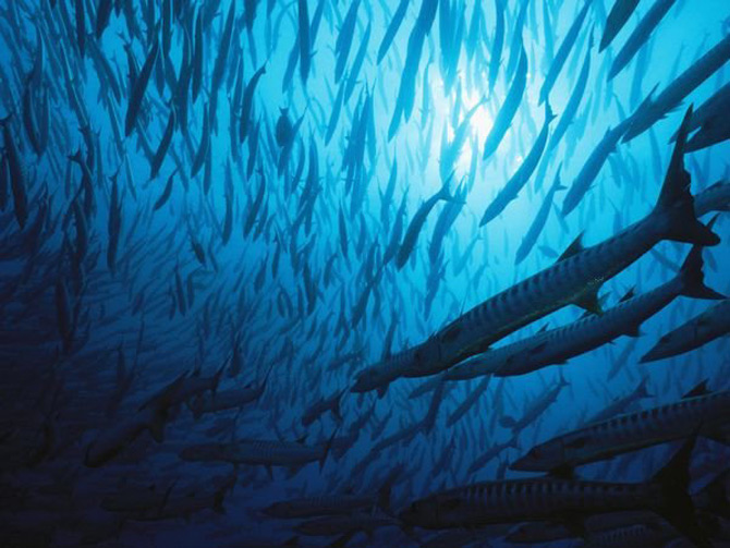 Viata in albastru: National Geographic - Poza 14