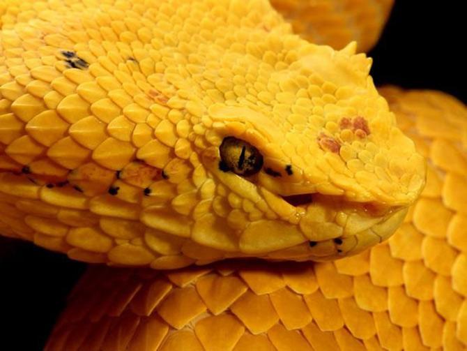 Viata in galben: National Geographic - Poza 4