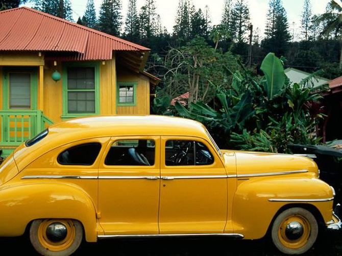 Viata in galben: National Geographic - Poza 9