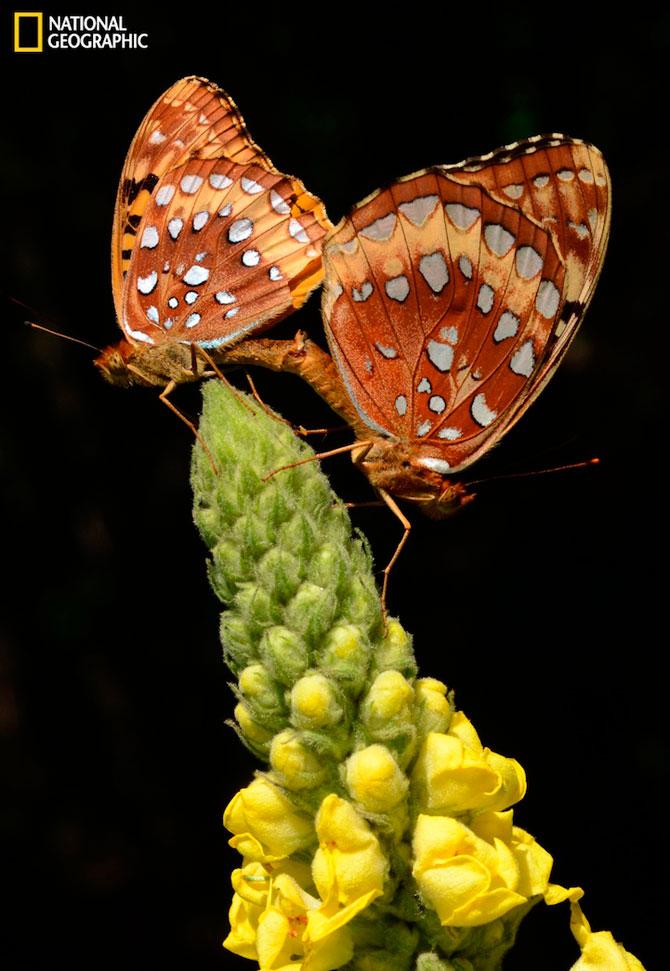 Iubirea in fotografii de la National Geographic - Poza 2