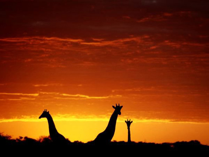 Viata in portocaliu: National Geographic - Poza 12