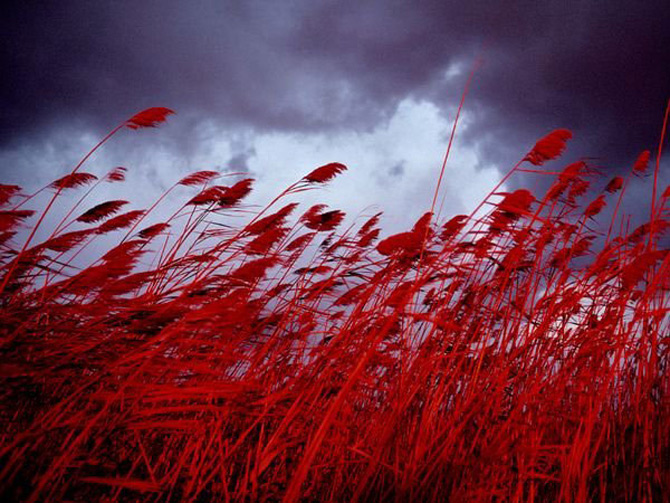 Viata in rosu: National Geographic - Poza 7