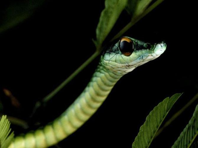 Viata in verde: National Geographic - Poza 1