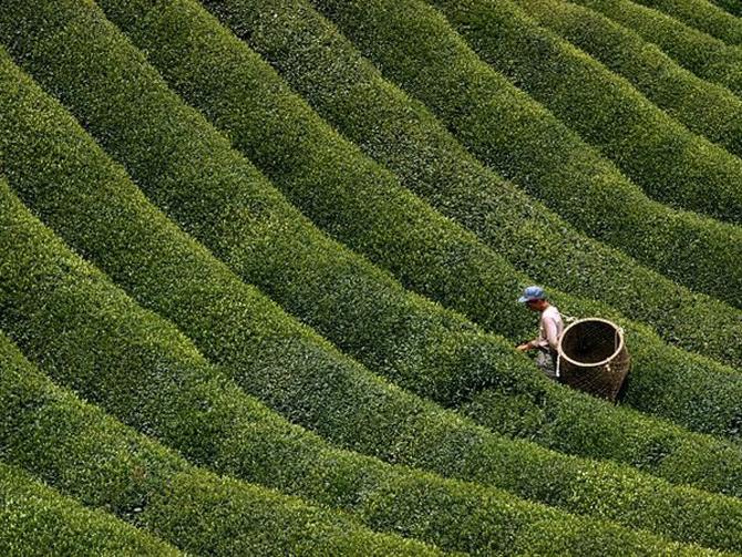 Viata in verde: National Geographic - Poza 4