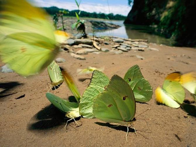 Viata in verde: National Geographic - Poza 5