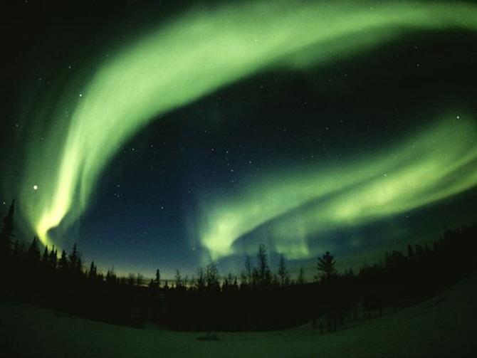 Viata in verde: National Geographic - Poza 7