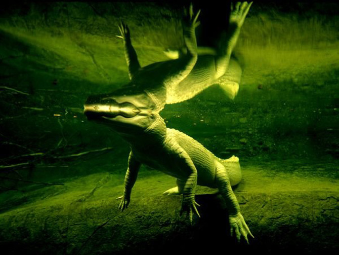 Viata in verde: National Geographic - Poza 8