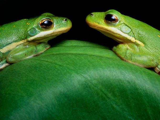 Viata in verde: National Geographic - Poza 9