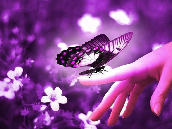 Viata in violet: National Geographic - Poza 1