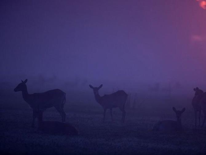 Viata in violet: National Geographic - Poza 2