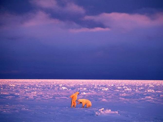 Viata in violet: National Geographic - Poza 3