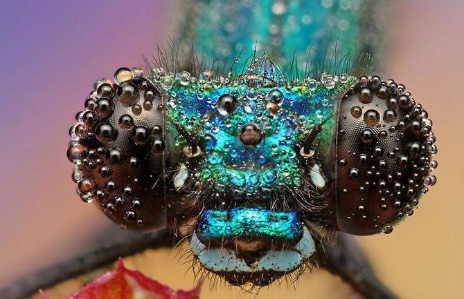 In intimitatea insectei cu Ondrej Pakan - Poza 2