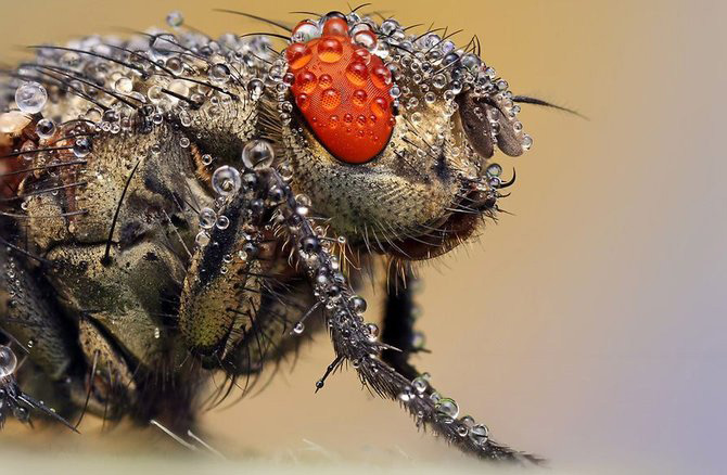 In intimitatea insectei cu Ondrej Pakan - Poza 3