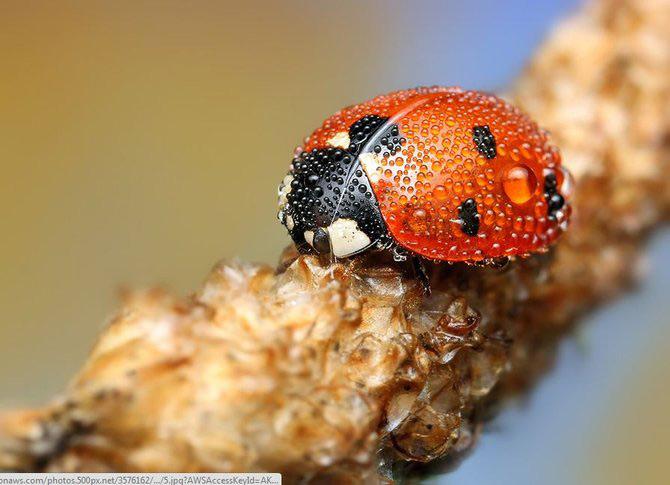 In intimitatea insectei cu Ondrej Pakan - Poza 5