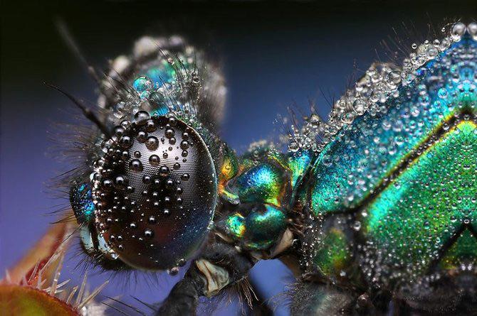 In intimitatea insectei cu Ondrej Pakan - Poza 6