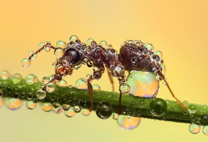 In intimitatea insectei cu Ondrej Pakan - Poza 7