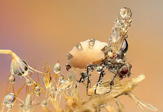 In intimitatea insectei cu Ondrej Pakan - Poza 8
