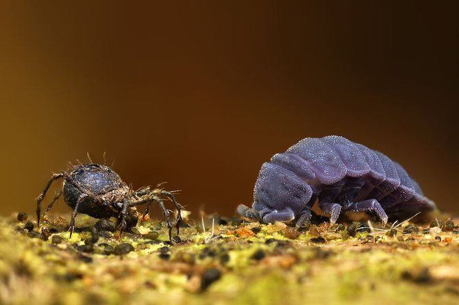 In intimitatea insectei cu Ondrej Pakan - Poza 11
